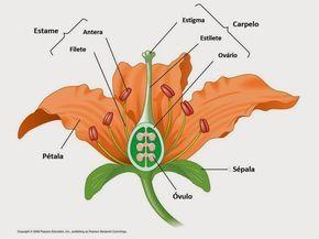 Flower Structure Diagram