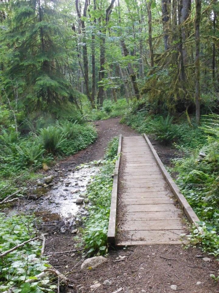 Elevation Gain Stone Mountain Hike : Squak mountain issaquah washington miles ft