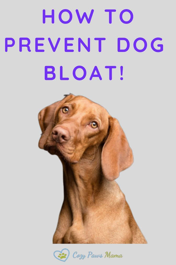 Why Is Dog Bloat So Dangerous With Images Dogs Dog Games