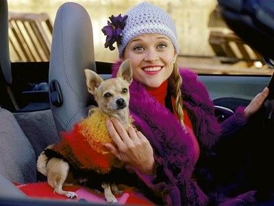 I'm Elle Woods, and this is Bruiser Woods....we're both Gemini vegetarians!