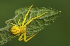 La araña roja y la araña amarilla - Paperblog