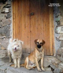 Sunday Snap: Dogs in Ollantaytambo  http://trotamunda.wordpress.com/2013/10/06/sunday-snap-dogs-in-ollantaytambo/