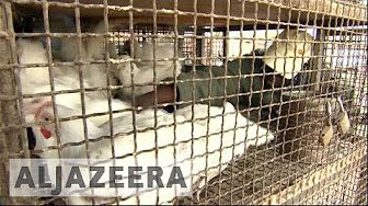 Zimbabwe efforts to contain bird flu outbreak