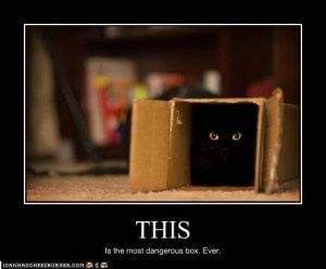 funny cats pictures Funny cats :-)