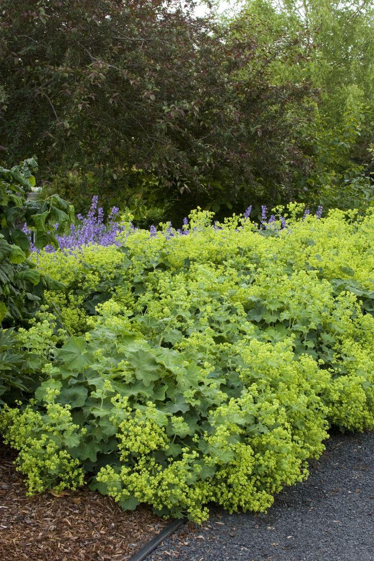 23 best garden perennials images on pinterest garden plants