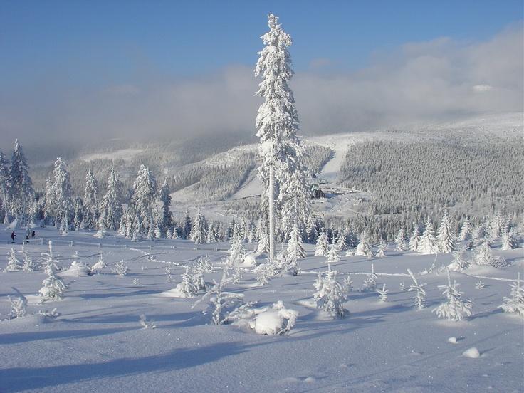 Cervenohorske Sedlo, Jeseniky Mountains, Czech Republic