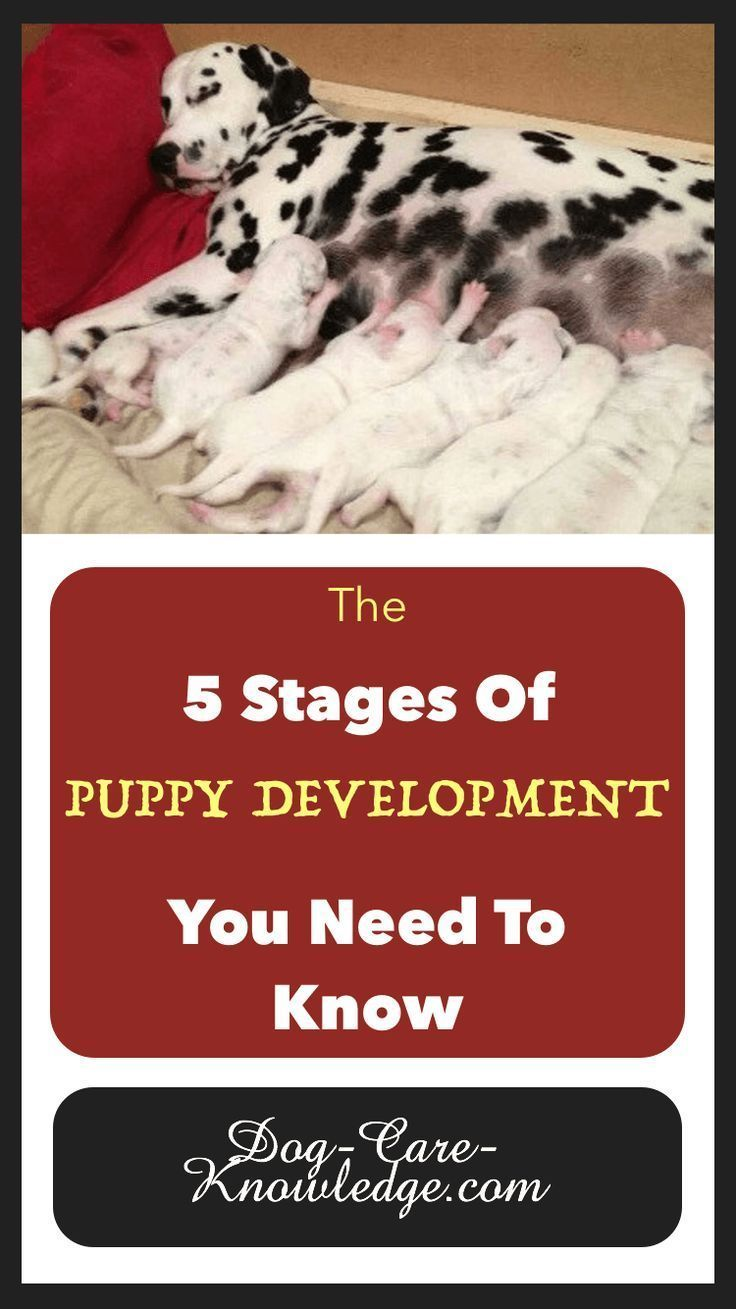 5 Stages Of Puppy Development You Need To Know Socializing Dogs