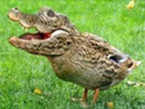 How Creationism Taught Me Real Science 12 The Crocoduck - http://holesinthefoam.us/how-creationism-taught-me-real-science-12-the-croc/