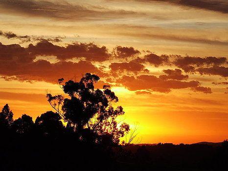 Sun Rise by Willem Van Cleef