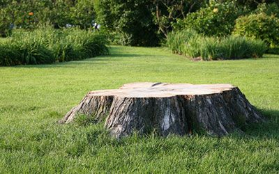 Remove a Tree Stump From Your Yard