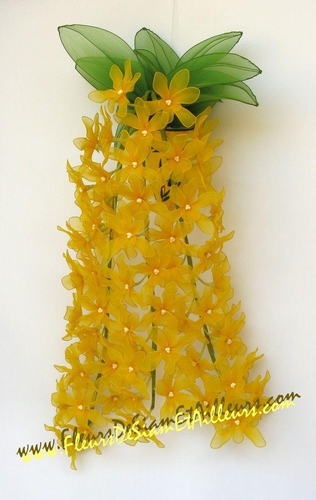 Orchidée Dendrobium Speciosum