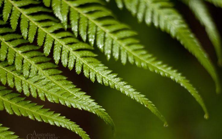 Ferns Otway Forest Park