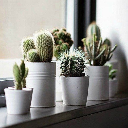 Die Windowsill Cactus Collection. Samen für fünf ausgefallene Arten, unsere Bestseller …   – Plants