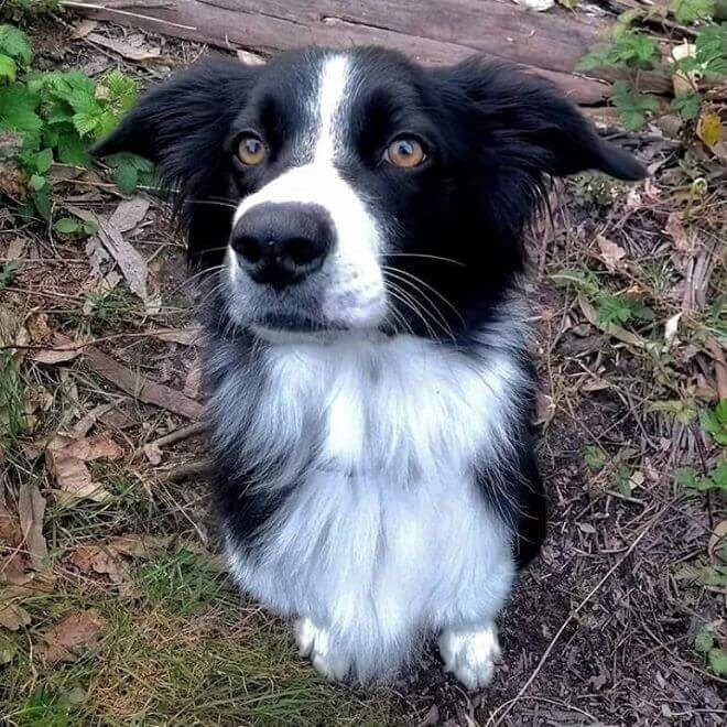 100 Smart Dog Names Dog Names Smart Dog Border Collie
