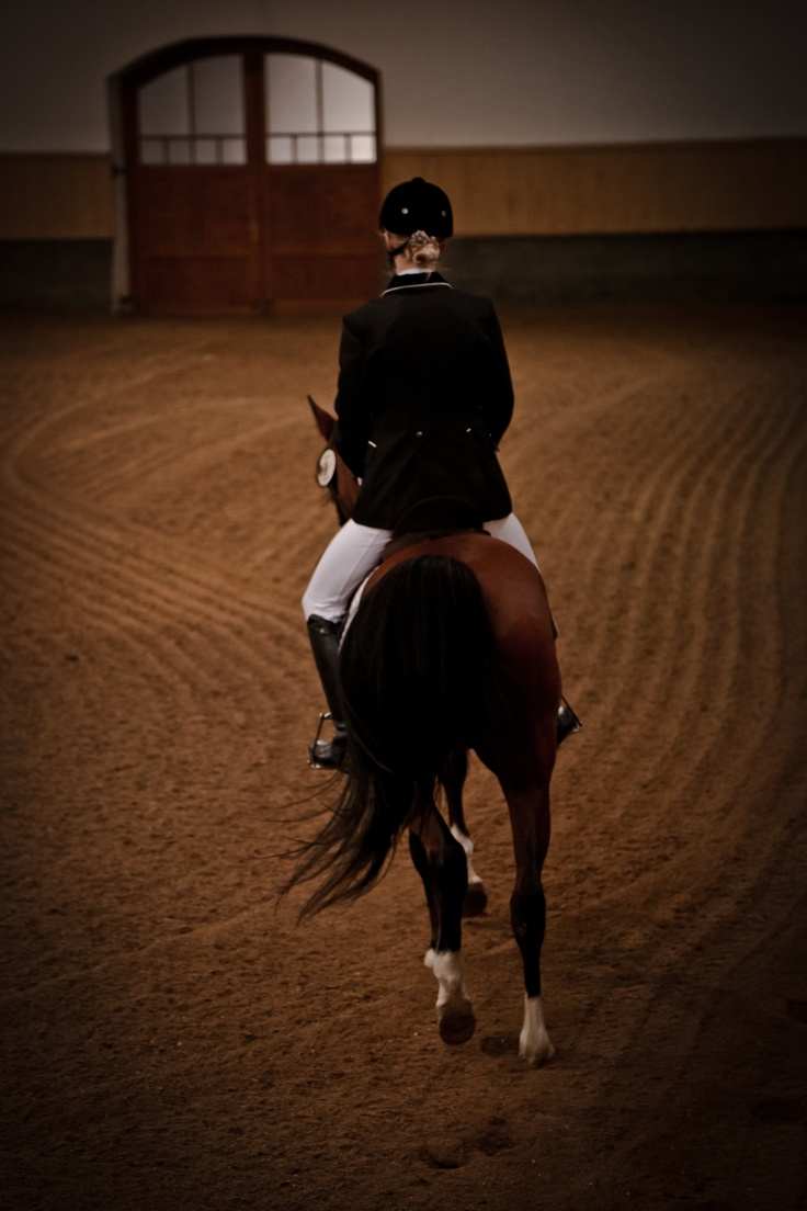 66 best equestrian images on pinterest horses equestrian and