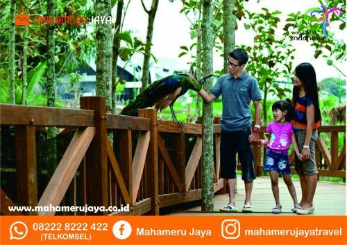 salah satu wisata edukasi di batu malang -eco green park