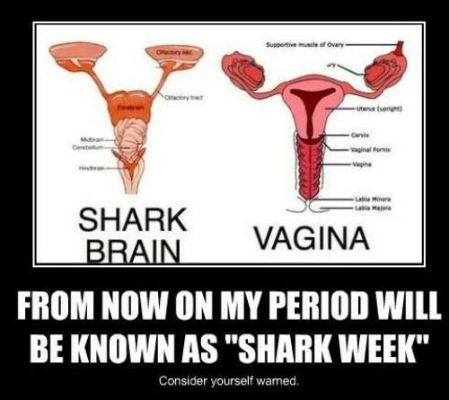 Rhiannon's Shark Week!!  So appropriate! LOL