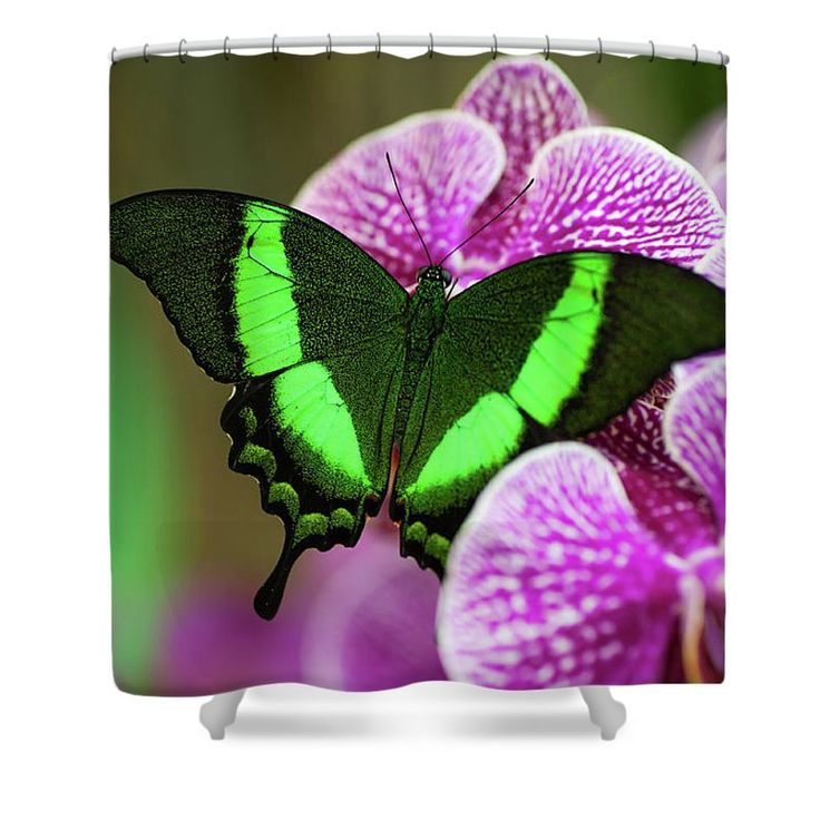 """Emerald Swallowtail On Purple Orchid. Beauty In Frame 2 Shower Curtain by Jenny Rainbow.  This shower curtain is made from 100% polyester fabric and includes 12 holes at the top of the curtain for simple hanging.  The total dimensions of the shower curtain are 71"""" wide x 74"""" tall."""