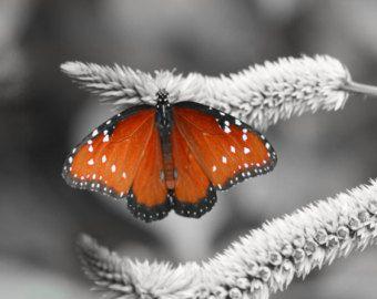 """foto di regina delle farfalle: nero, bianco e un pop dell'arte farfalla arancione foto 11 x 14"""""""