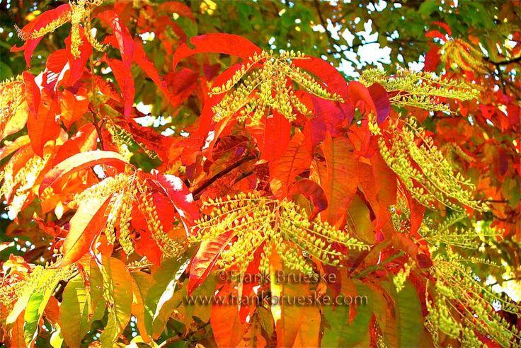 Autumn Leaves, Blue Ridge Mountains,    Autumn in North Carolina, Autumn Color, Blue Ridge Mountains, Frank Brueske by FrankBrueskePhotos on Etsy