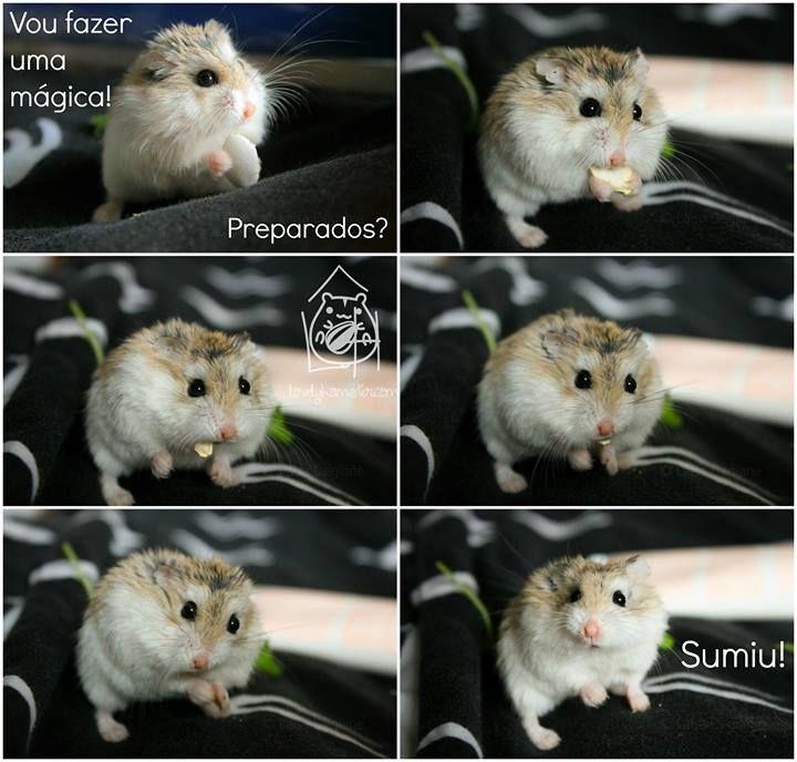 Císar #hamster #lovelyhamster