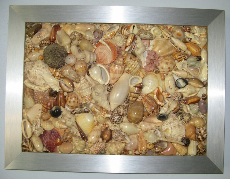 78 images about seashell display ideas on pinterest for Ideas for displaying seashells