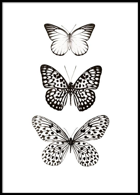 Black and white poster with butterflies.