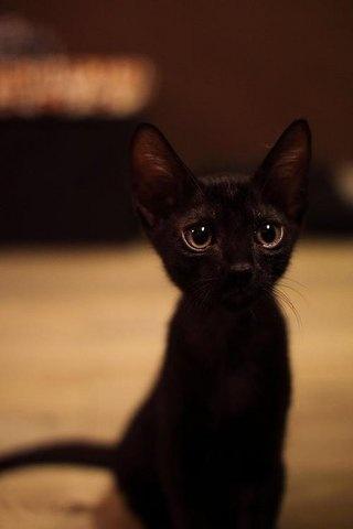 one more black cat