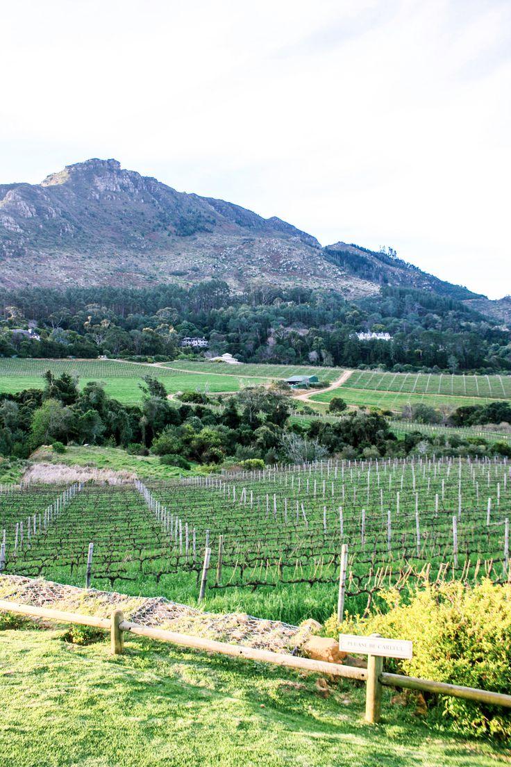 #Winefarm in #southafrica is heaven! #capetown #winetasting #winewinewine #winetime #winery #winerylife #sommelier #sustainableliving #sustainablewine #sustainablewinery #ecofriendly #sustainabletravel #ecotravel #yeswayrosé #deliciouswine #green #winegeek #wineporn