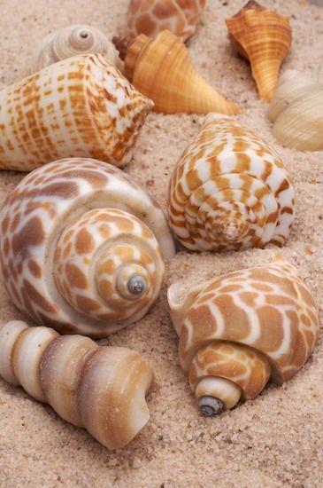 Sea shells in earth colors: