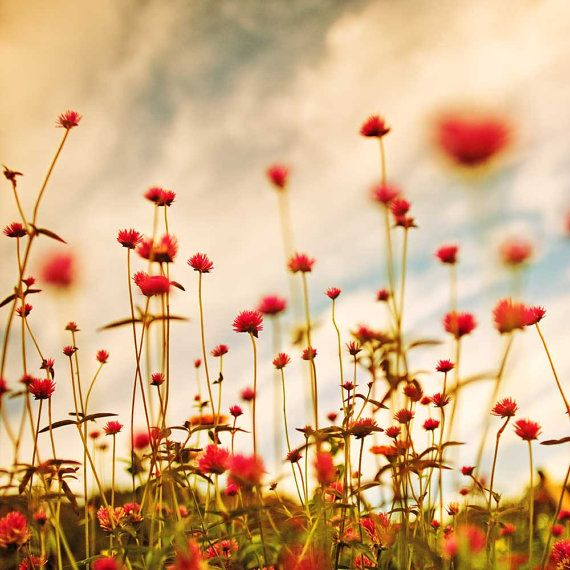 Red flower photography nature photo home decor by CarlChristensen, $30.00