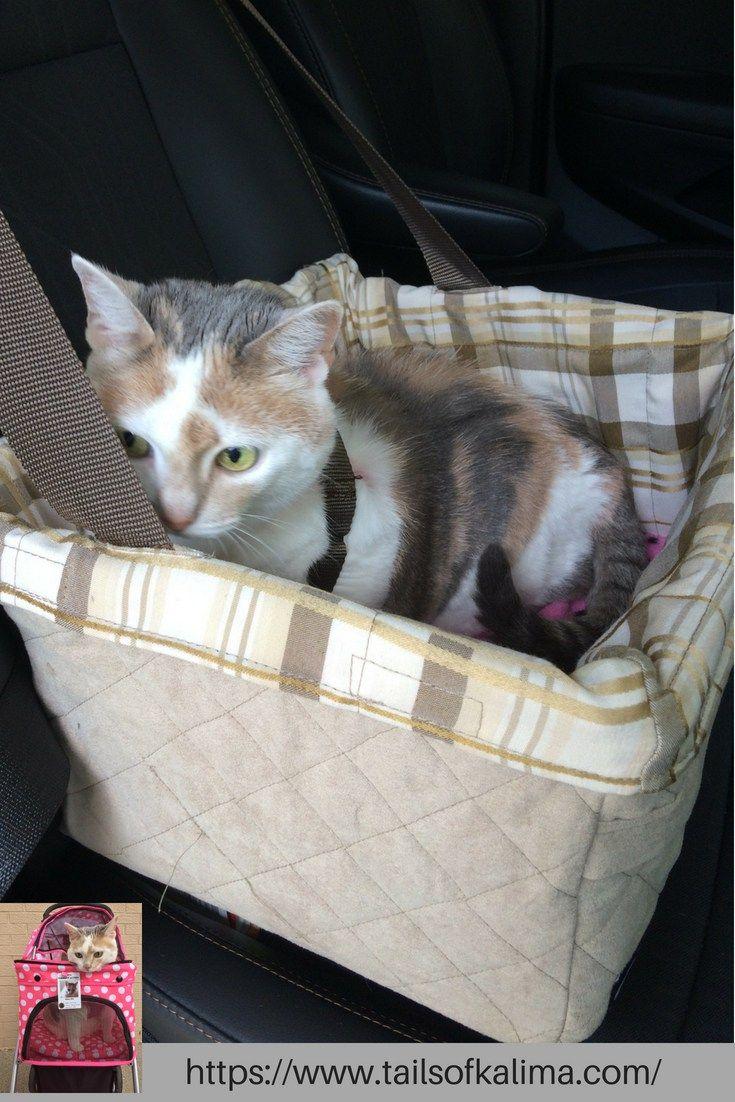 Cat Car Travel Tips Cat Training Scratching Cat Training Cat Care