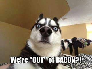 Funny Memes Clean Animals : Best memes images funny stuff animal funnies
