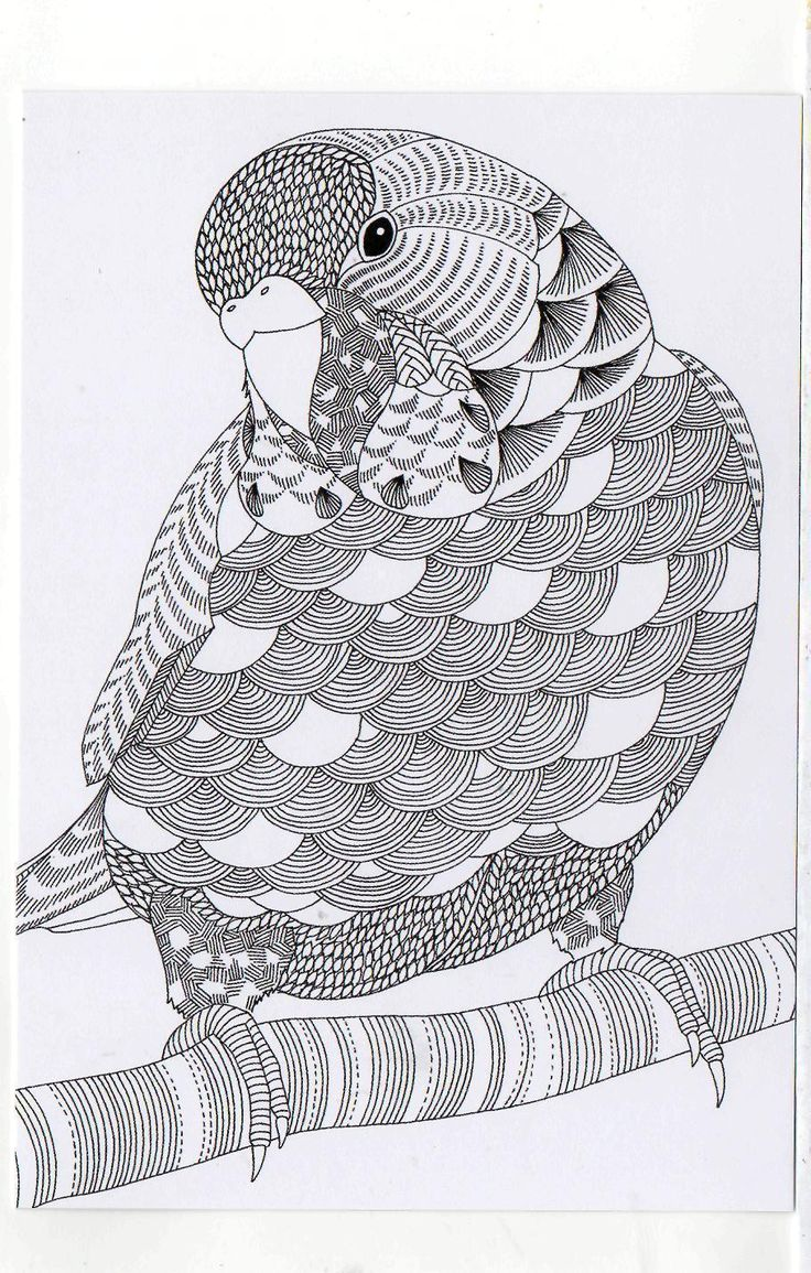 Millie Marotta's Colouring in Card - Parrot