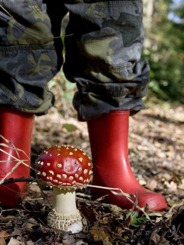 In de Herfst buiten spelen wordt nog leuker met deze activiteiten die je in eigen tuin of buurt kunt doen!