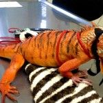 Iguana Tiger Halloween Costume