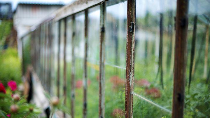 De kas is een plek waar je groenten, kruiden en fruit in opkweekt, in het voorjaar. Maar het is vooral een onderdak voor de gewassen, die er vanaf mei groeien. Ben je zelf in het bezit van een kas, dan hebben we 5 tips voor je opgesomd! Vanaf mei kun je onder andere tomaten planten…