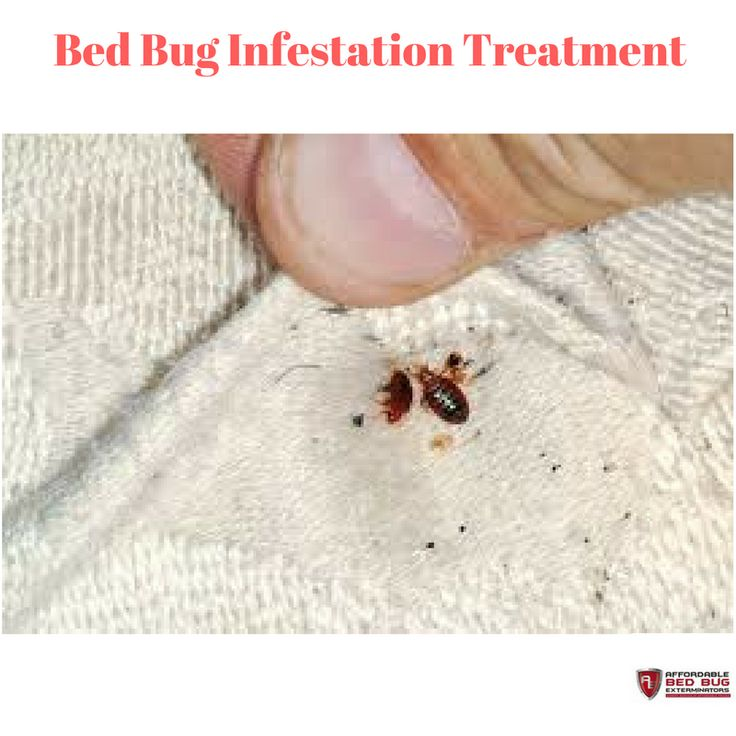 home heat w the bedbug for island bugs chasers excellent pro with bed throughout popular ordinary control pest street regarding regard long of bug to exterminator treatments cheap contemporary designs bloor wonderful