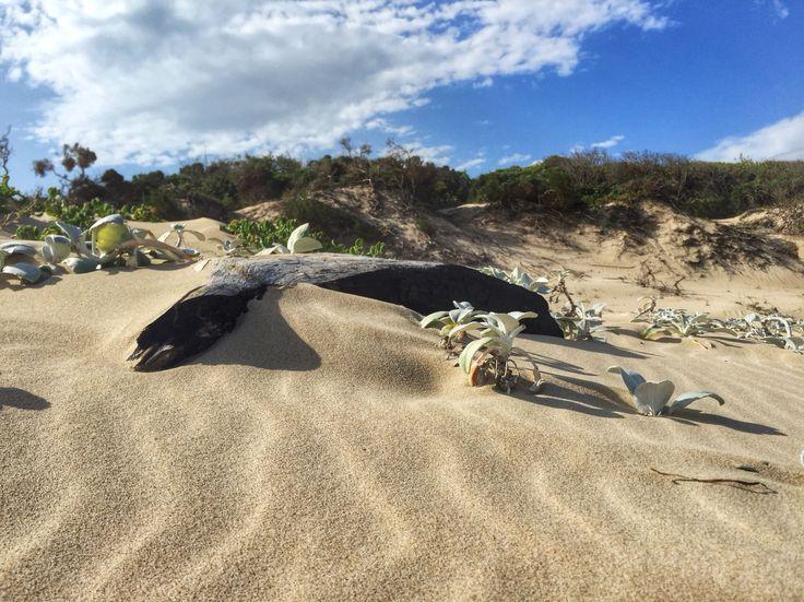 White sand beach / Indian Ocean / South Africa