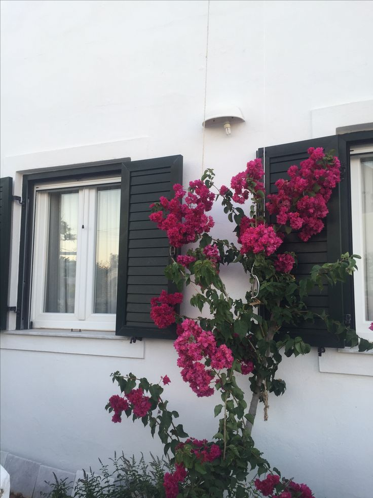 the pink flowers add so much color to the white houses... a wonderful sight to see