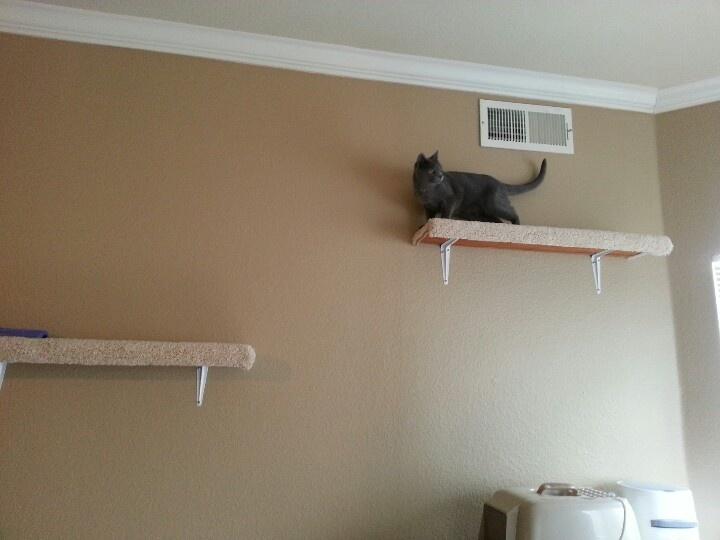 cat fighting sound