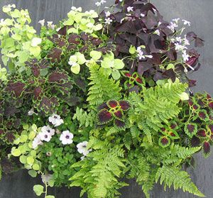 This website gives tips and guidelines for planting pots with coordinating environment requirements and color tips