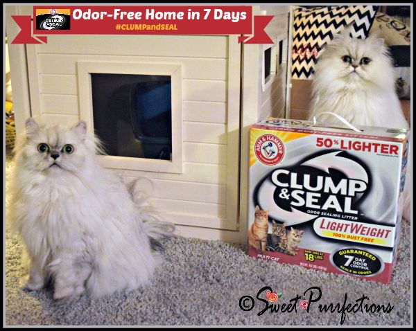Truffle and Brulee with ARM & HAMMER CLUMP & SEAL™ litter #CLUMPandSeal @PetSmart #sponsored