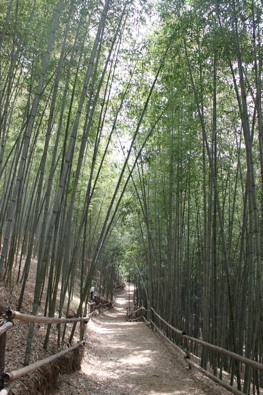 Damyang Bamboo Forest  담양 (personal photo)