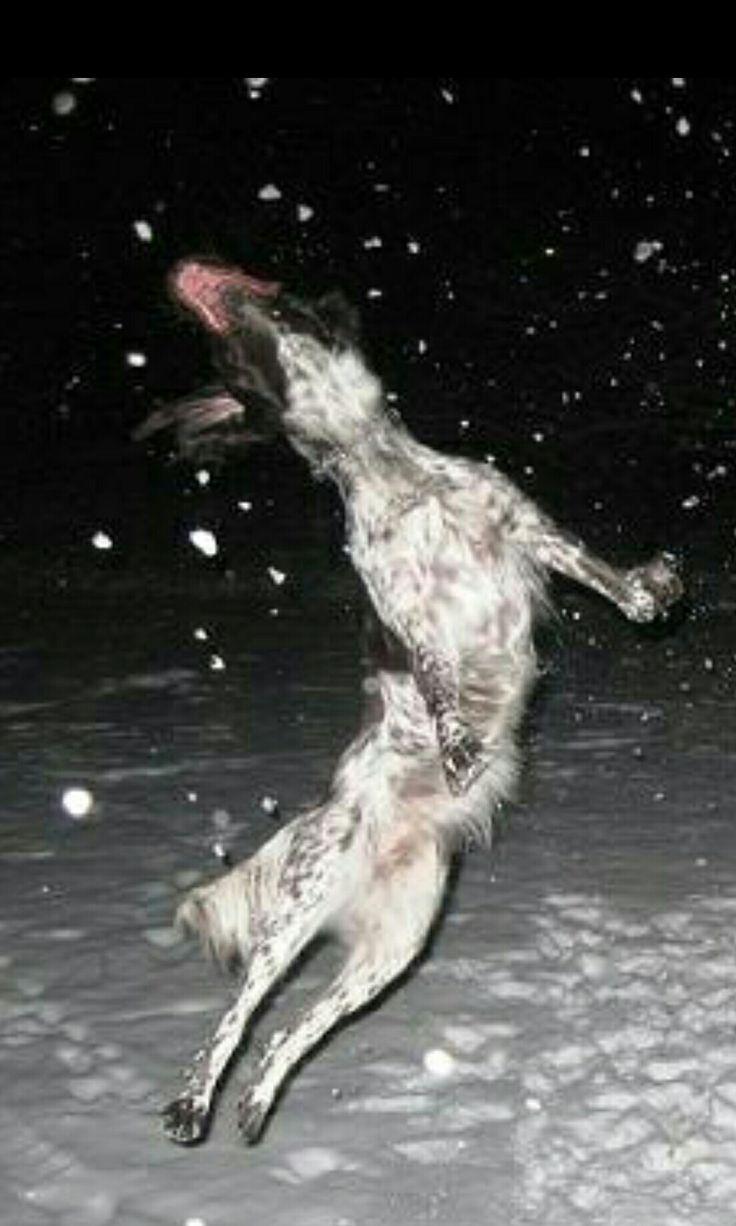 Mila loves snow