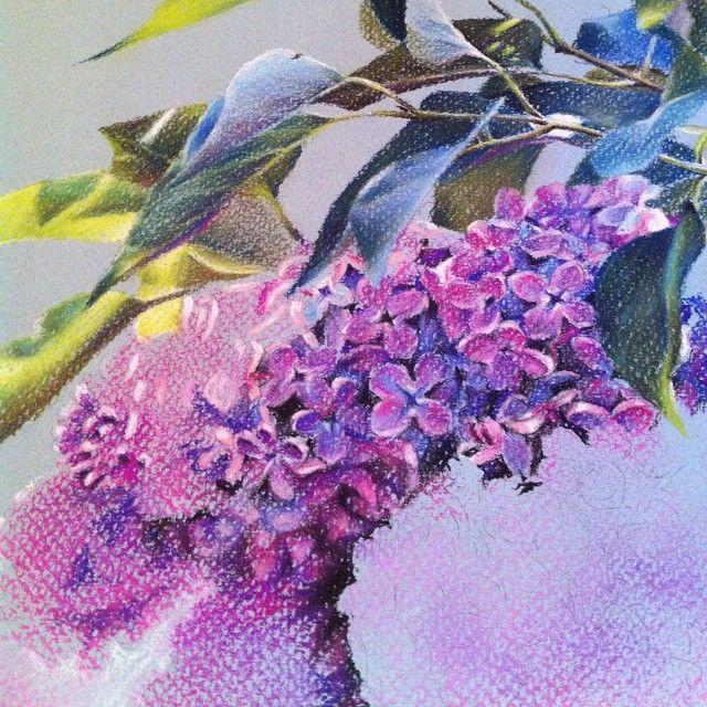 Сиренька для @galkamigalka in progress )) медленно, но движется! 7 потов сошло  #рисую #сирень #пастель #пастельныекарандаши #сухаяпастель #цветы #безфильтра #xaxalerikart #pastel #art #drawing #lilac