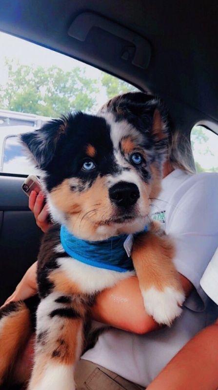 VSCO – #hound #dog #puppy | dogsofvsco