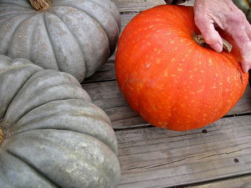 types of squash and how to cook them