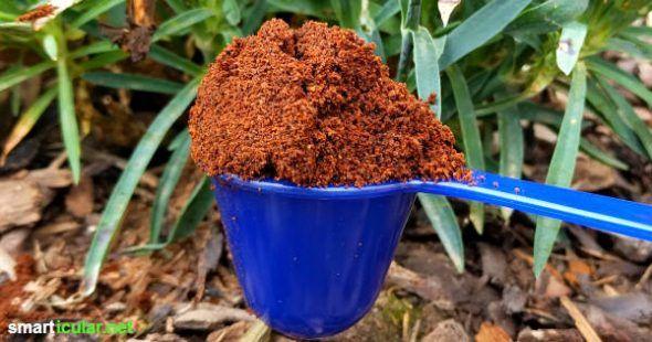 Mit Kaffeesatz kannst du auf natürliche Weise düngen, Schädlinge vetreiben un… – Dünger selbermachen