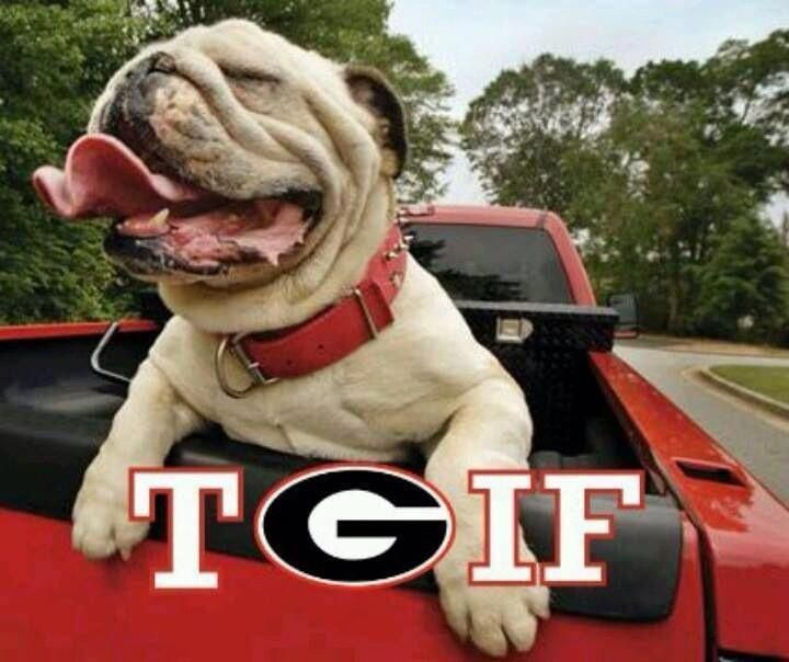 Tgif Bulldog Google Search Bulldogs Georgia Bulldogs Football Bulldogs Football Georgia Dawgs